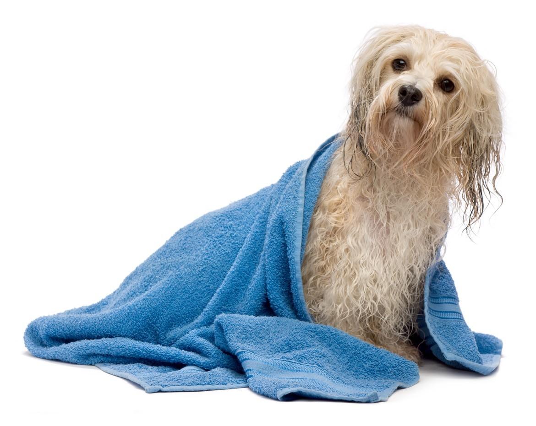 Petland Joplin Dog Bathing Service